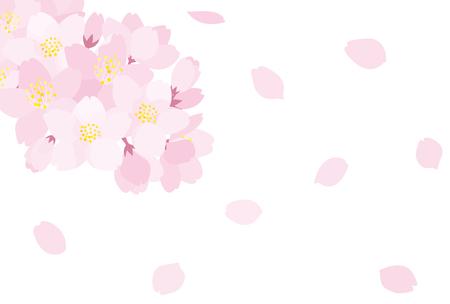 Kirschblüten Standard-Bild