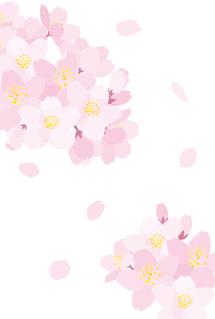 cherry blossoms: Cherry blossoms Stock Photo