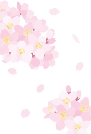 Fleurs de cerisier Banque d'images - 53293997