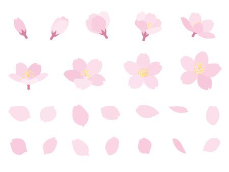 Bloesems van de kers knop en bloemblaadje Stockfoto
