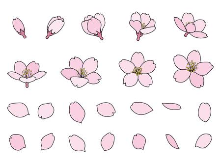 Fleurs de cerisier bourgeons et pétales Banque d'images - 53294002