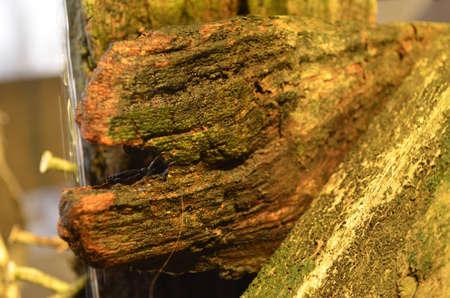 wallpapaer: wet wood broken