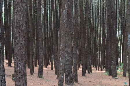 shady: shady under the trees Stock Photo