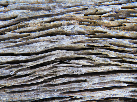 drywood: Wooden texture of termite damaged