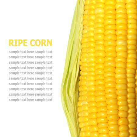 espiga de trigo: Los granos de ma�z maduro aislado en un fondo blanco
