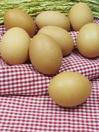 gallina con huevos: Huevos de gallina frescos