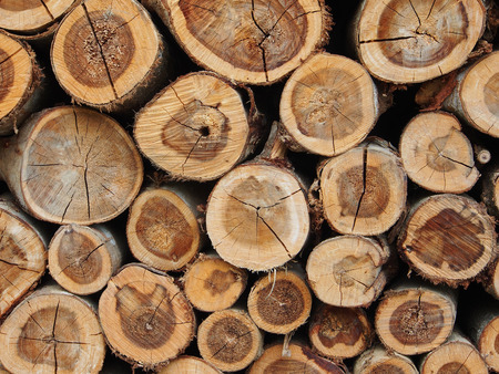 pile of logs: Pile of wood logs background texture