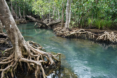 Tha Pom Khlong Song Nam Swamp is the most popular travel place in krabi thailand