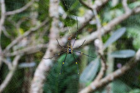 Spinne auf Spinnennetz Standard-Bild - 91590570
