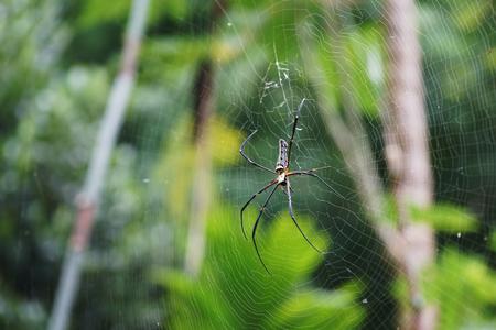 Spinne auf Spinnennetz Standard-Bild - 91590571