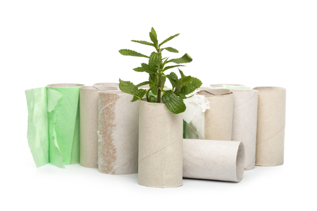 Empty toilet paper roll recycled as a seedling planter Stock Photo