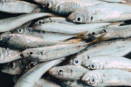 Frischer Fisch im Markt auf dunklem Hintergrund