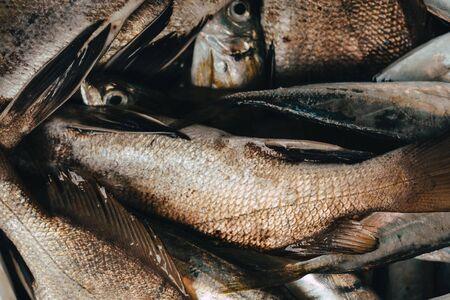 Fresh fish in market on dark background