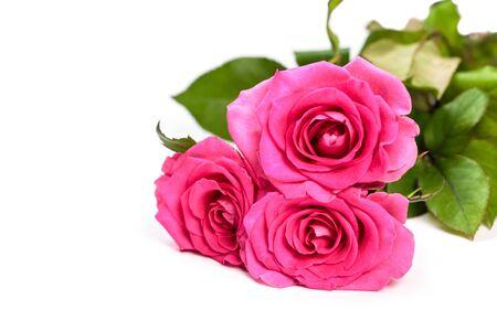 Różowy bukiet róż na białym tle