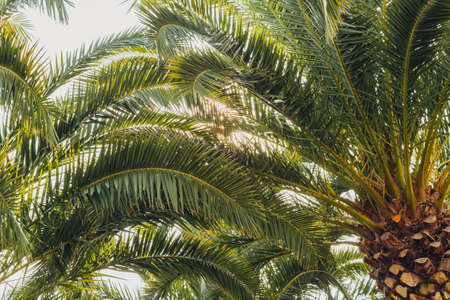 Tropical jungle, palm leaves on a sunny day, sky. Stockfoto