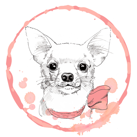 Chihuahua hand drawn portrait in pink frame Stock Photo