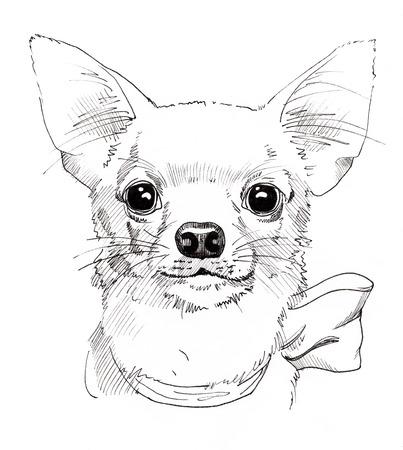 Chihuahua hand drawn portrait