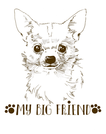 white little cute chihuahua hand drawn portrait