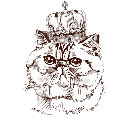 hand drawn Exotic Shorthair cat portrait with the crown