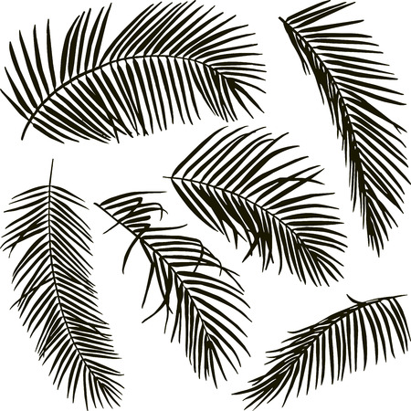 Hand drawm palm leaves isolated on white background
