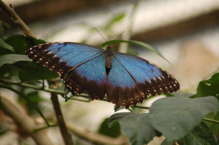 Butterfly in Nature Stock Photo - 9992917