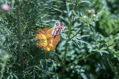 Butterfly on a yellow flower among the greens