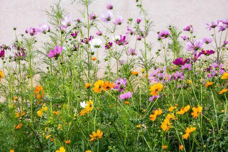 albuquerque: Wispy flower collection in Albuquerque, New Mexico Stock Photo