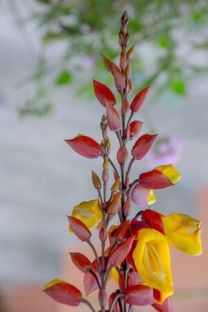 Peruvian Fancy Alstroemeria blossom on a stem Фото со стока