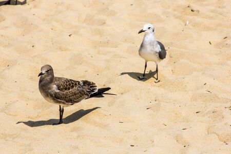 Two seagulls on the beach of Rehoboth Beach Delaware Фото со стока