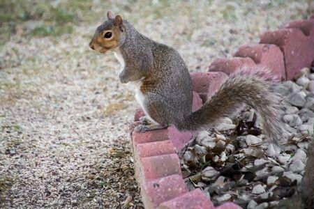 Squirrel standing on sculptured bricks in Dover, Delaware Фото со стока