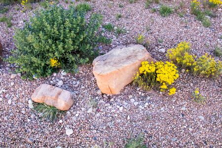 Simple and lovely natural desert setting Фото со стока - 70727361