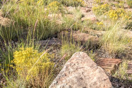 One Pointed Protruding Rock among the desert foilage