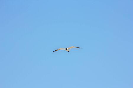 Delaware Rehoboth Beach Seagull