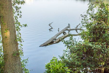 Tree Branch floating in a Delaware lake Stock Photo