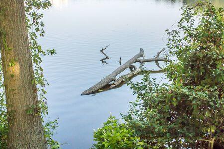 Tree Branch floating in a Delaware lake Фото со стока - 73189149