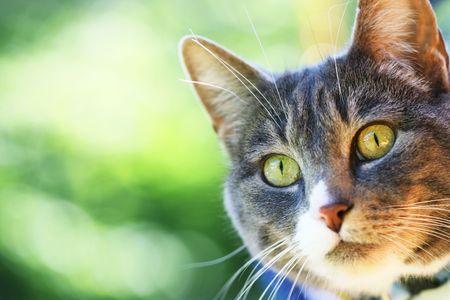 A horizontal colour photograph of a cats face. photo