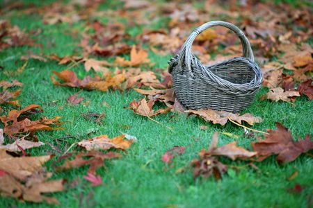 A basket sitting on the grass surrounded by fallen autumn leaves in a horizontal color photograph.