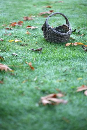 A basket sitting on dewy grass with fallen autumn leaves in a vertical color photograph.