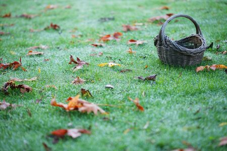 A basket sitting on dewy grass with fallen autumn leaves in a horizontal color photograph. Stock Photo