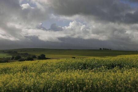 Farm Fields,Wellington,Cape Town photo