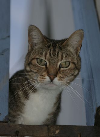 inquiring: Whats up Pussycat?