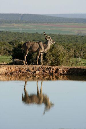 pozo de agua: Kudu a Charca