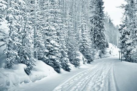 monta�as nevadas: esqu� y pie imprime a trav�s del bosque cubierto de nieve en vail, colorado