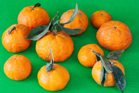 Several pieces of mandarin oranges of the gold nugget variety placed somewhat separated from each other on a green background. Citrus fruits have green leaves.