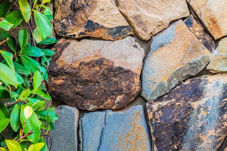 Brown gray big stone wall with green leaves on left side. Background.
