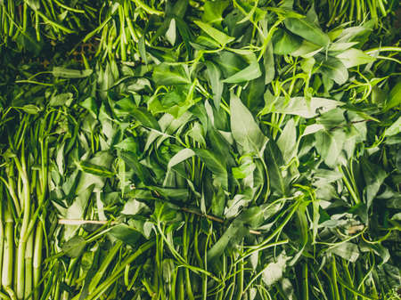 Close up heap of pile of raw spinach leaf on a local asia farmers market. Cooking and healthy food concept, vitamins for strong immunity, good nutritional value Stok Fotoğraf