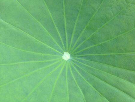 green pattern: Leaf background Stock Photo