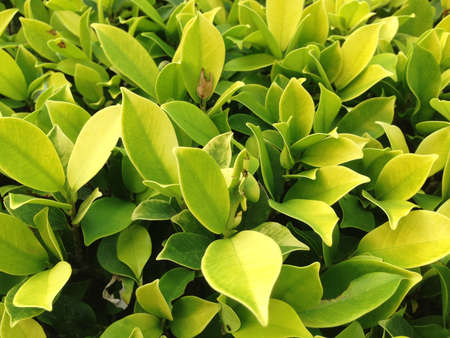assort: Leaf texture