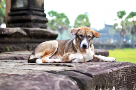 A dog lay down on big stone with happy and feel comfortable  Stock Photo