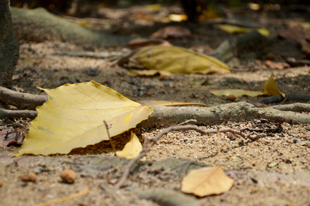 Yellow leaf and branch falling down on floor